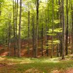 Nuove opportunità per la montagna con il Piano forestale e Piano di Sviluppo Rurale 2014-2020