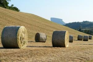 Paesaggio del Parmigiano Reggiano_Bianchini