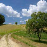 Paesaggio del Parmigiano Reggiano, Special School a Sarzano