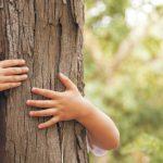 Novembre, festa degli alberi con le scuole