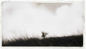 All'ombra di un filo d'erba