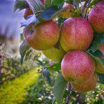 Corso di potatura alberi da frutto