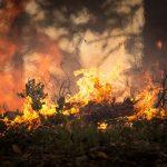 Prevenzione incendi boschivi. 12-26 marzo 2019