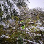 Nevicata del 5 maggio 2019. Ringraziamenti del sindaco Stefano Costi