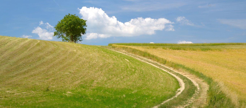 Un Manifesto per la Scuola del Paesaggio del Parmigiano Reggiano di Montagna